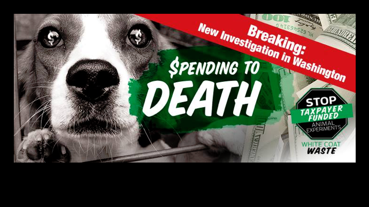 White Coat Waste Project – Stop Taxpayer-Funded Animal Experiments