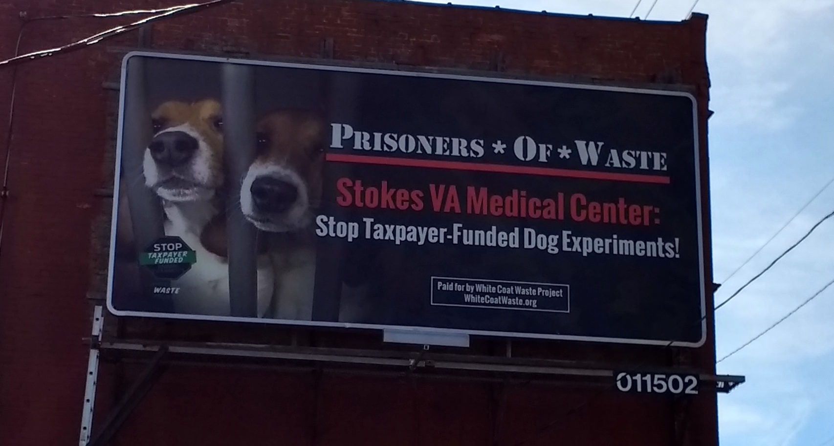 "Cleveland VA Killed ""Friendly"" Dogs in Experiments, Misled Press ..."